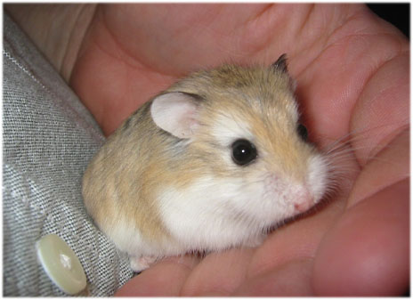 Irrational Fear: Hamsters